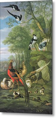 Cock Pheasant Hen Pheasant And Chicks And Other Birds In A Classical Landscape Metal Print by Pieter Casteels