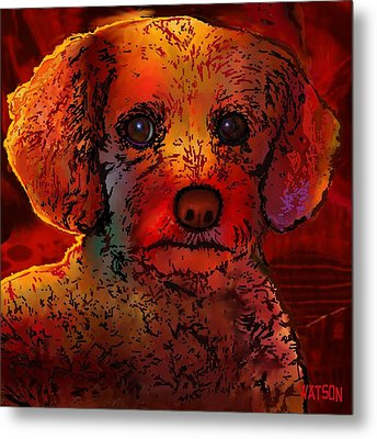 Cockapoo Dog Metal Print