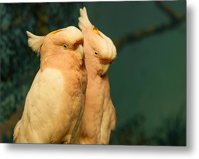 Cockatoo I Love You Metal Print
