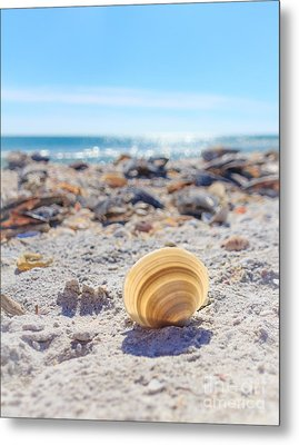 Cockle Shell Summer At Sanibel Metal Print