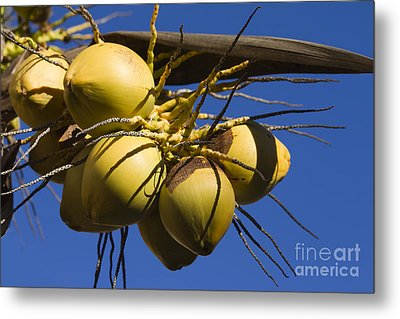 Metal Print featuring the photograph Coconut 1 by Teresa Zieba