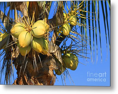 Metal Print featuring the photograph Coconut 2 by Teresa Zieba