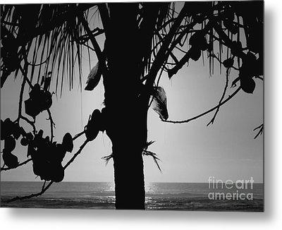 Coconut Palm - Cocotier - Ile De La Reunion - Reunion Island Metal Print by Francoise Leandre