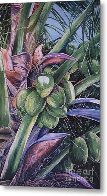 Coconuts   14x26 Metal Print by John Clark
