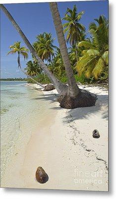 Coconuts On Pristine Tropical Beach Metal Print by Sami Sarkis