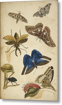 Cocoon Metal Print by British Library