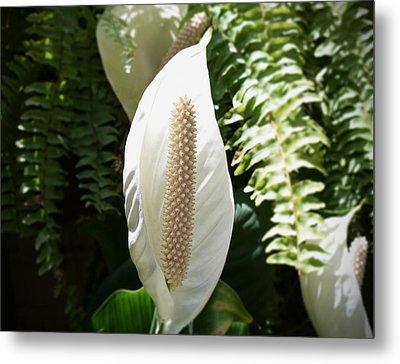 Cocoon Flower Metal Print by Felipe Nunez