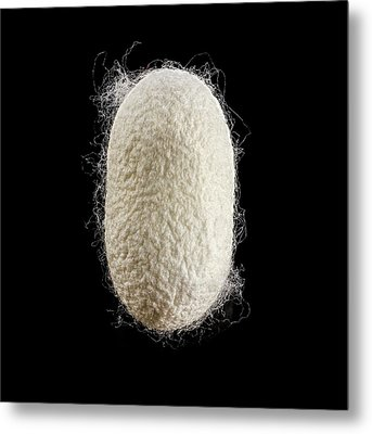 Cocoon Of Silk Metal Print by Science Photo Library