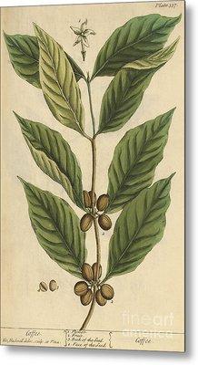 Coffee-medicinal Plant-1737 Metal Print