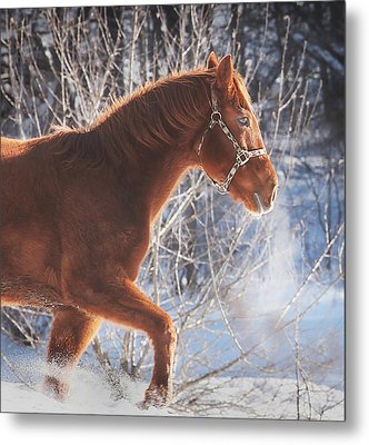 Cold Metal Print by Carrie Ann Grippo-Pike