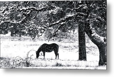 Metal Print featuring the photograph Cold Comfort by Julia Hassett