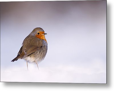 Cold Feet Metal Print by Roeselien Raimond