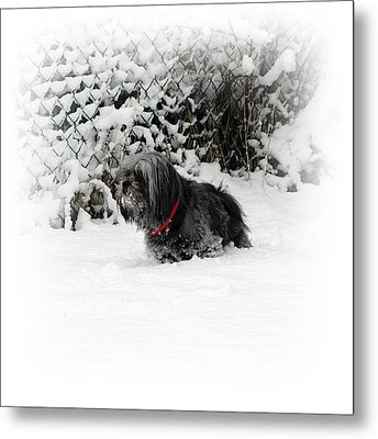 Cold Feet Metal Print by Sharon Lisa Clarke