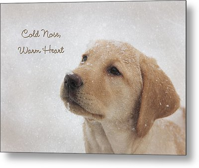 Cold Nose Warm Heart Metal Print by Lori Deiter