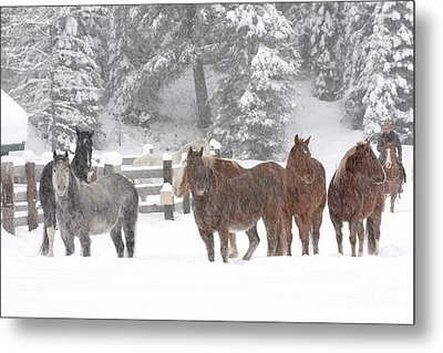 Cold Ponnies Metal Print