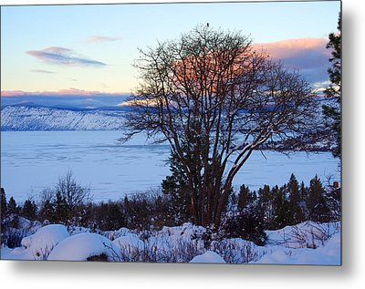 Cold Trees And Ice Metal Print by Harold Greer