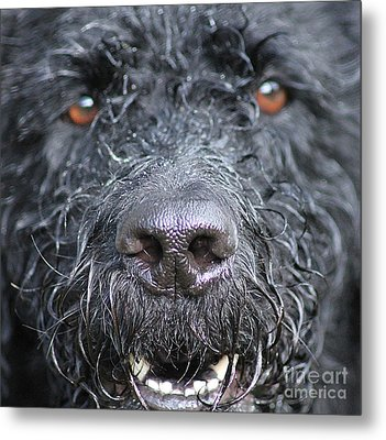Cold Wet Nose Metal Print by Michelle Orai