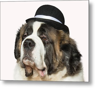 Cole The St Bernard Metal Print