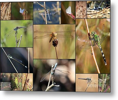Collage Marsh Life Metal Print