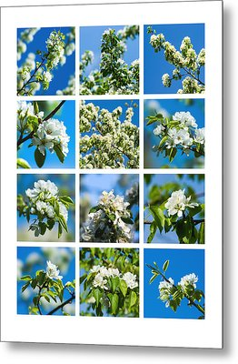 Collage Spring Blossoms 1 Metal Print by Alexander Senin
