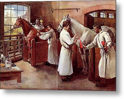 Collecting Horse Blood Metal Print by National Library Of Medicine
