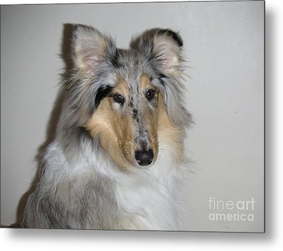 Collie Metal Print by David Grant