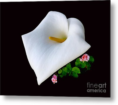 Colombian Calla Lily Metal Print