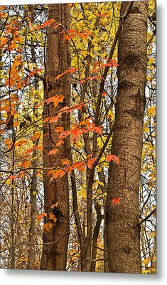 Color And Trees Lan 225 Metal Print
