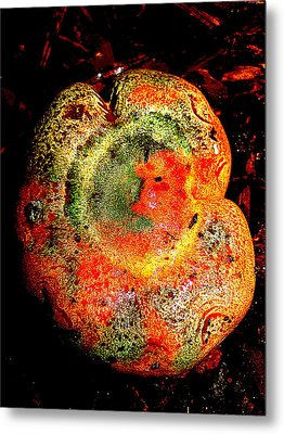 Metal Print featuring the photograph Color Collage Mushroom by John King