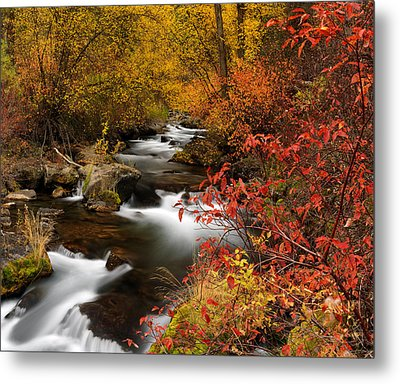 Color Of Autumn Metal Print by Leland D Howard