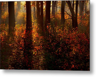 Color On The Forest Floor Metal Print by Robert Charity
