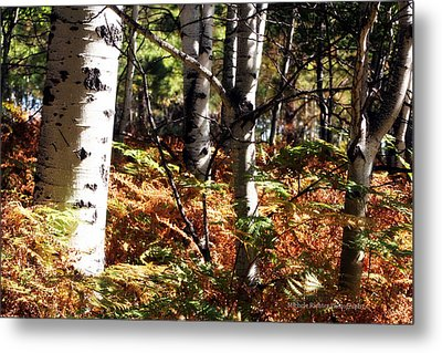 Color On The Trail Metal Print by Michele Richter