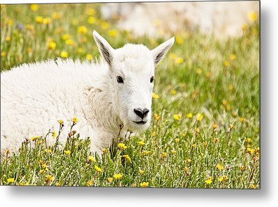 Colorado Kid Metal Print by Scott Pellegrin