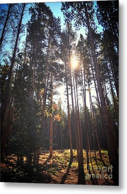 Colorado Pines Metal Print by Garren Zanker