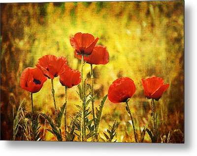Metal Print featuring the photograph Colorado Poppies by Tammy Wetzel