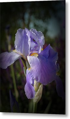 Metal Print featuring the photograph Colorado Purple Iris by Susan D Moody