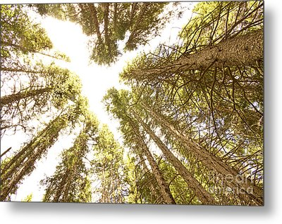 Colorado Rocky Mountain Forest Ceiling Metal Print by James BO  Insogna