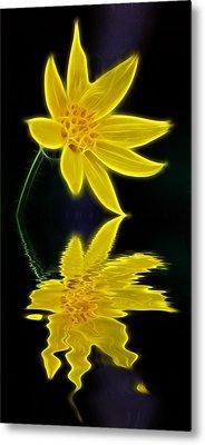 Colorado Wildflower Metal Print by Shane Bechler