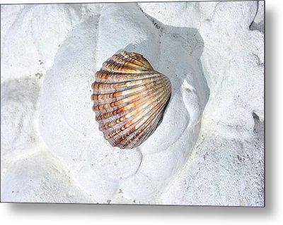 Colored Seashell  Metal Print