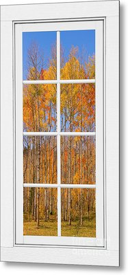 Colorful Aspen Tree View White Window Metal Print by James BO  Insogna