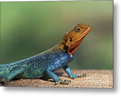 Colorful Awesomeness... Metal Print by Nina Stavlund