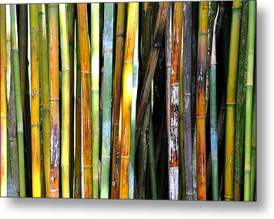 Metal Print featuring the photograph Colorful Bamboo by Jodi Terracina