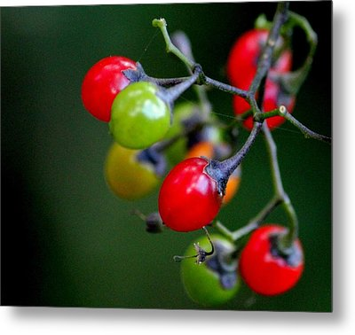 Colorful Berries Metal Print by Rosanne Jordan