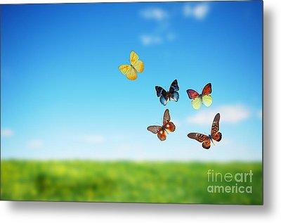 Colorful Buttefly Spring Field Metal Print by Michal Bednarek