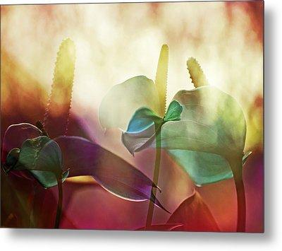 Colorful Calla Metal Print by Eiwy Ahlund