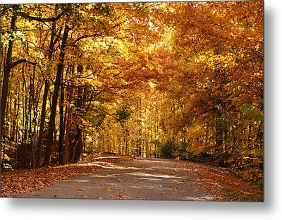 Colorful Canopy Metal Print by Sandy Keeton
