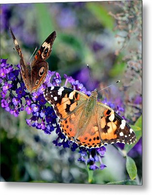 Colorful Cousins Metal Print by Deena Stoddard