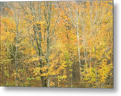Colorful Fall Trees In Maine Metal Print by Keith Webber Jr