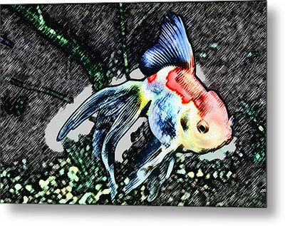 Colorful Fantail Goldfish Metal Print by Wernher Krutein