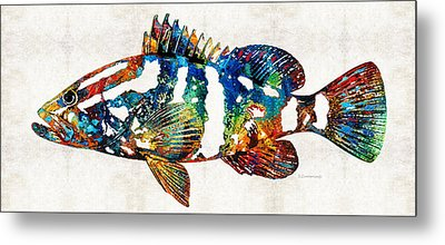 Colorful Grouper 2 Art Fish By Sharon Cummings Metal Print by Sharon Cummings